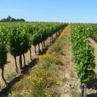 Conduite de la vigne bio